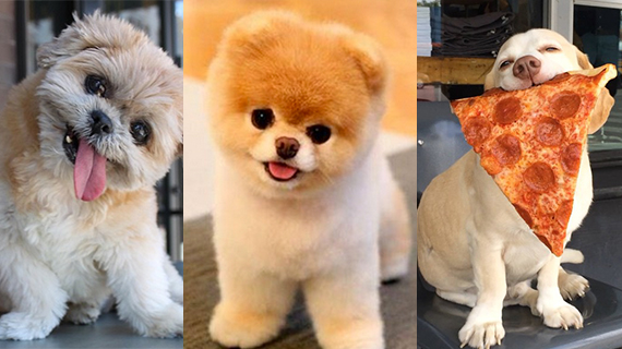 React The Dogs On Social Who Are More Famous Than You Ll